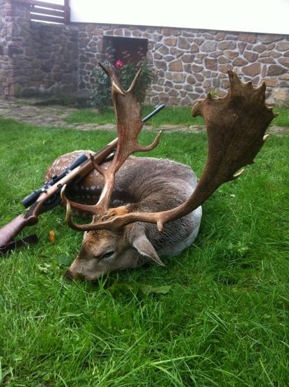 price list fallow deer prolov